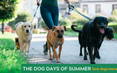 The Dog Days of Summer: How Dogs EverWalk