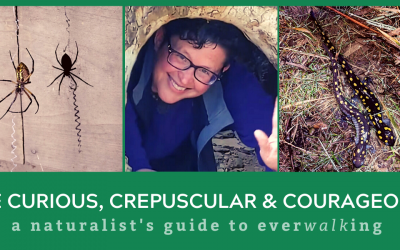 Be Curious, Crepuscular & Courageous: A Naturalist's Guide to EverWalking