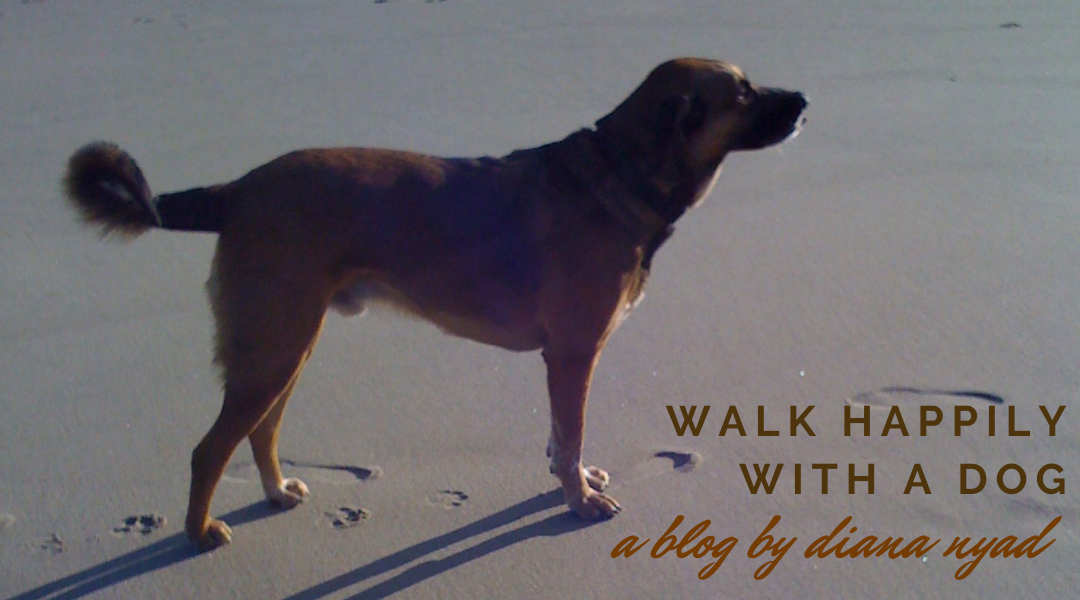 HOW TO WALK HAPPILY WITH A DOG